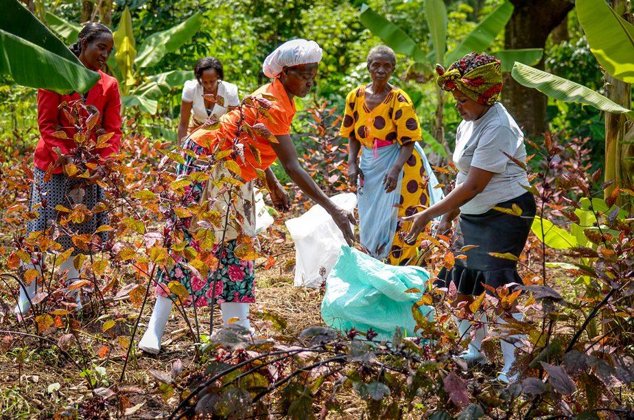 women harvesting, women empowerment